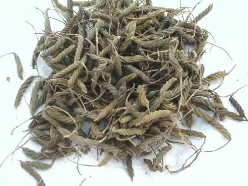 Helicteres Isora (Marod Phali)