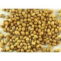 Coriander Seeds (Dhania)